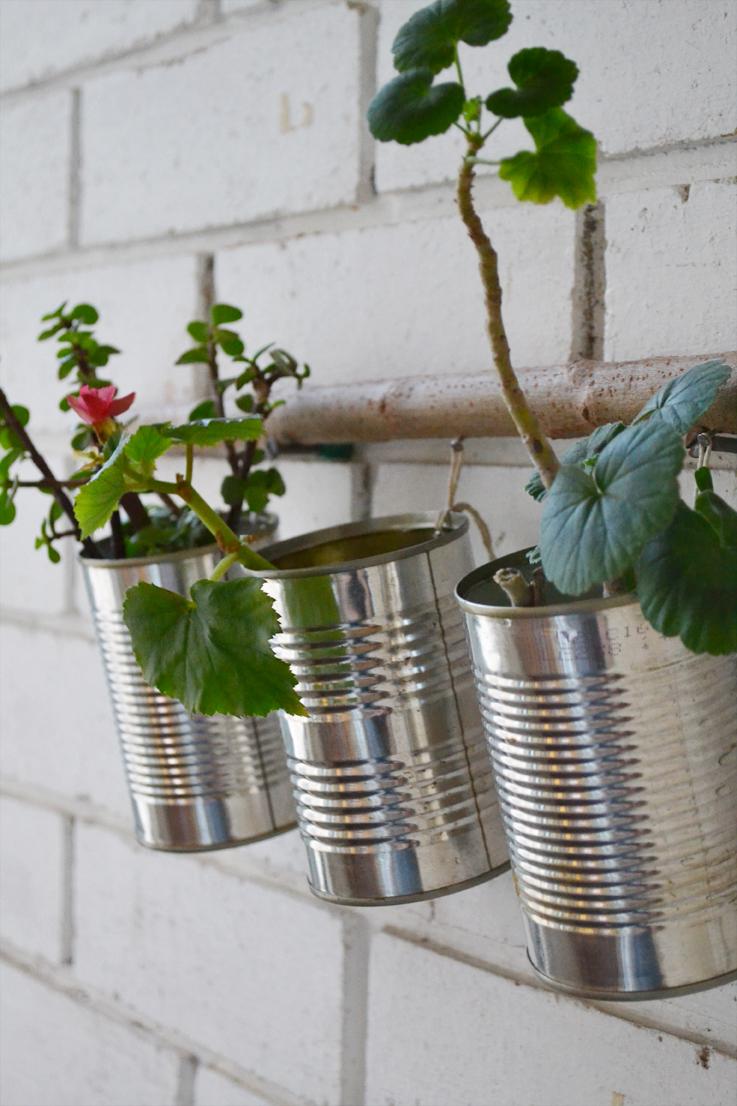 Diy Plant Nursery Blueberry Ash